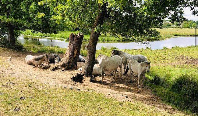 Wandelroutes Hellendoorn en omgeving